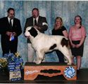 Best of Breed Champion-Mojito 2013