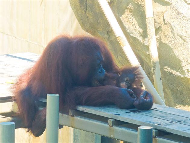 Kansas City Zoo Client Event