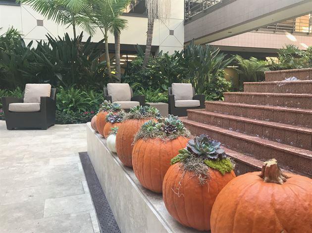Thanksgiving Pumpkin Event 2018