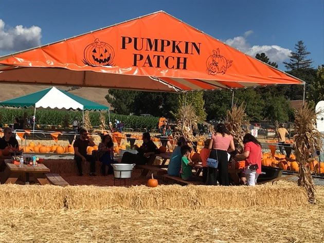 Pumpkin Patch 2018