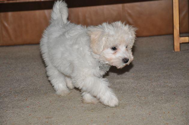 My dog Lilly!