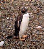 2006 Journey to Antarctica