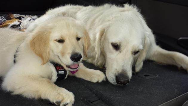 Tucker and Sydney