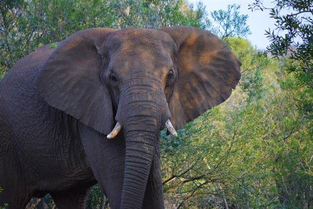Travel Log: Africa, August 2015
