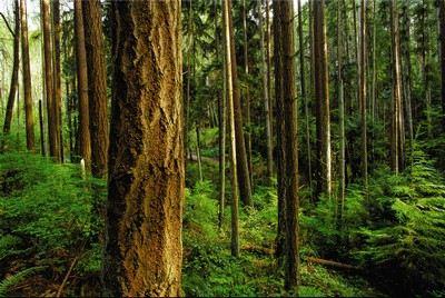 Forest Steward Photos