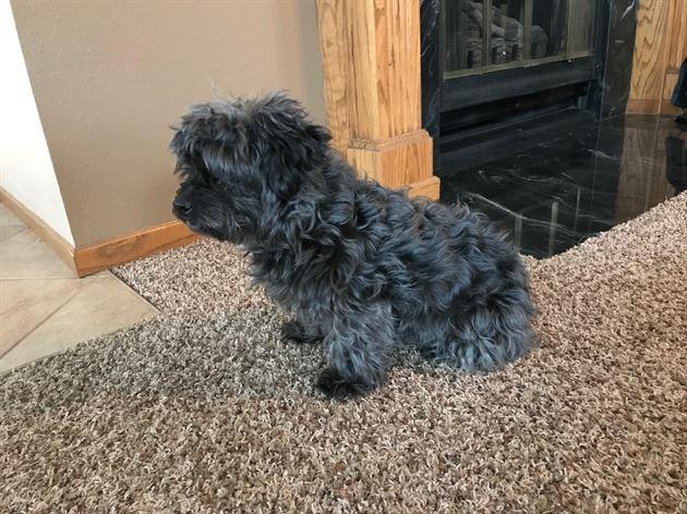My Dog Coco