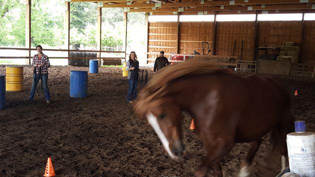 Equus Coaching Class 2016