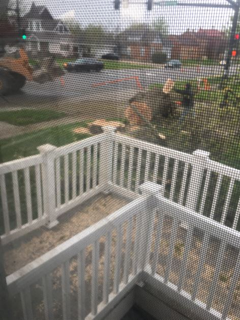 Tree Removal on Washington Street