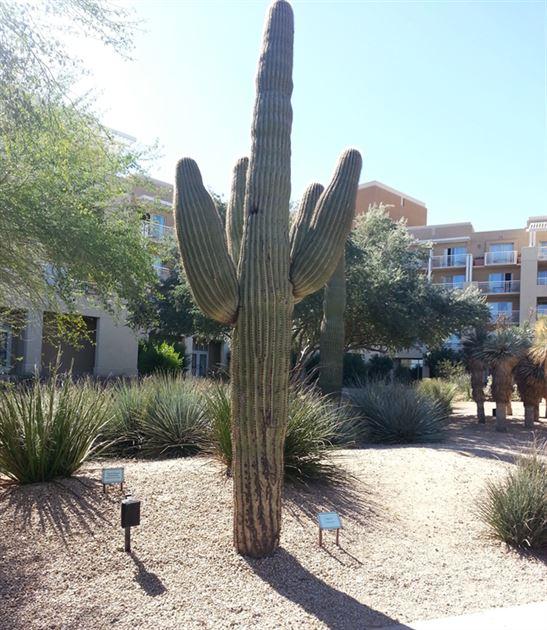 Ameriprise TPC 2/2015- Phoenix, AZ