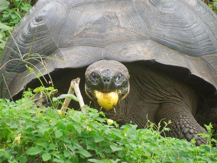 Galapagos Islands 2014