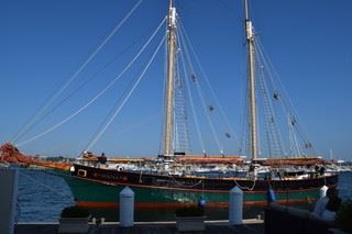 Newport Sail