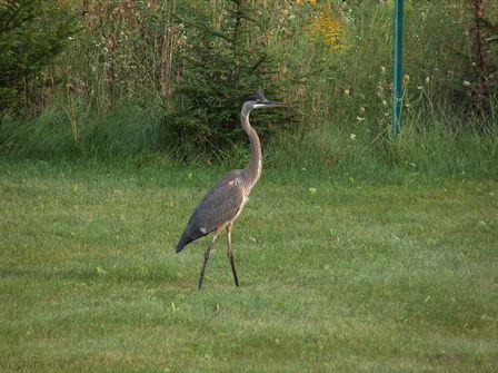 Photo Favorites - Birds