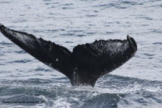 Client Event: Whale Watch Charter