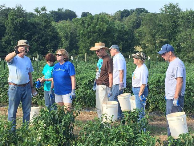 First Fruits Farm-volunteer harvest